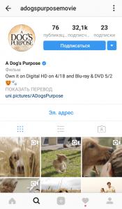 Бизнес на домашних животных в Instagram
