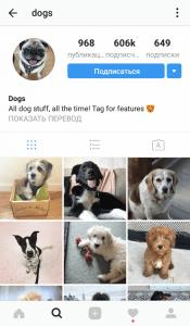 Домашние животные в Instagram