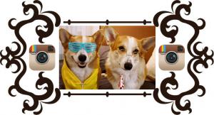 Популярность аккаунтов домашних животных в Instagram